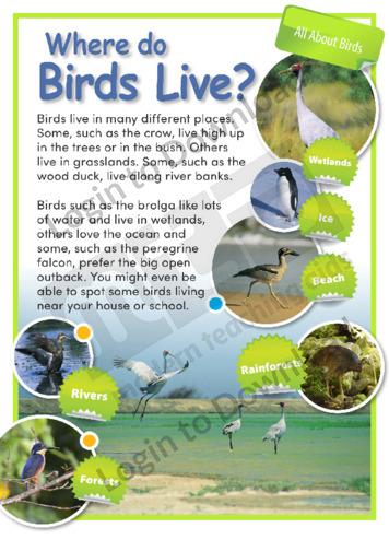Where Do Birds Live?