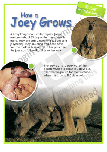 How a Joey Grows