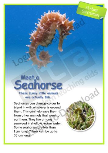 Meet a Seahorse