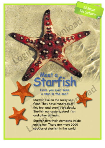 Meet a Starfish