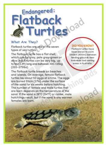 Flatback Turtles
