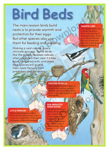Bird Beds