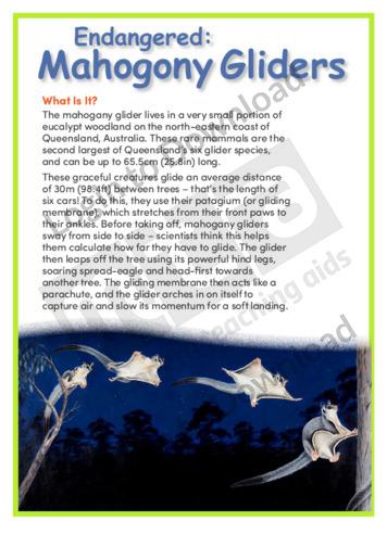 Mahogany Gliders