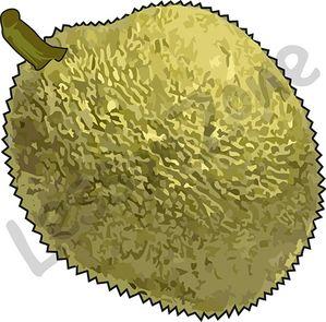 103008Z01_Jackfruit01