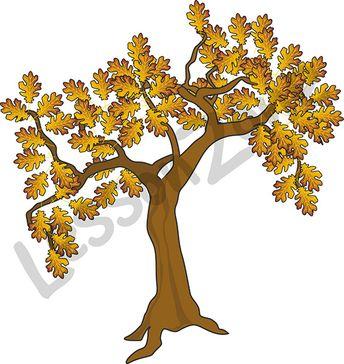 Brown oak tree