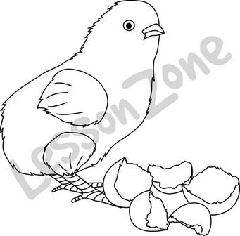 Chick with eggshells B&W