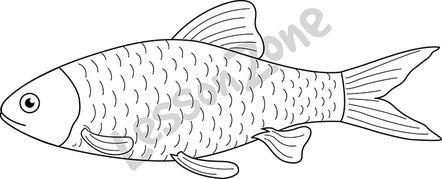 Fish  B&W