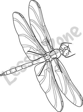 Dragonfly B&W