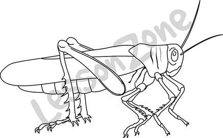Grasshopper B&W