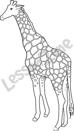 Giraffe  B&W
