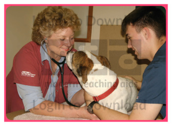 Let's Talk About: Veterinarian