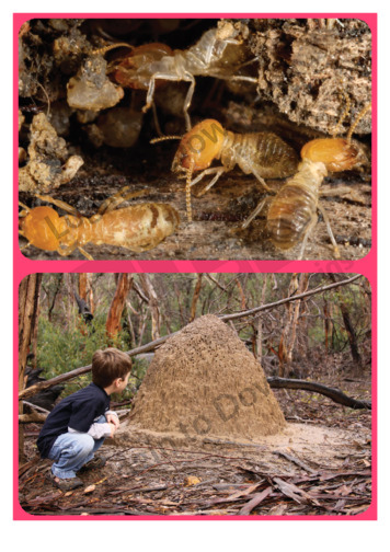 Let's Talk About: Termites and Nests