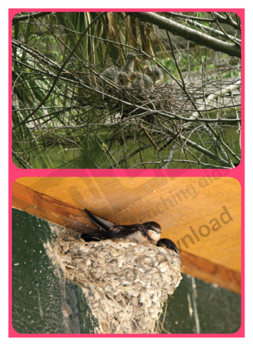 Let's Talk About: Bird Nests