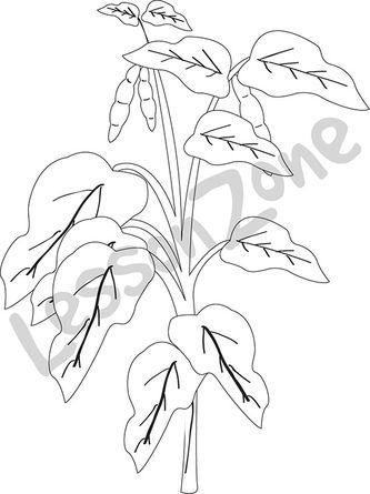 Bean plant B&W