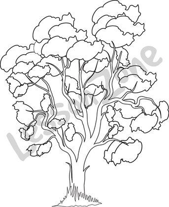 Eucalyptus tree B&W
