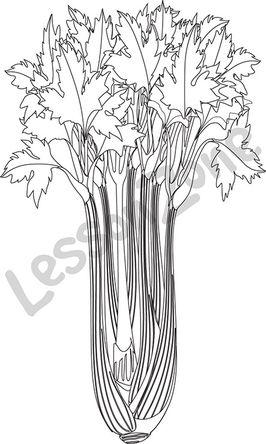 Celery stalk B&W