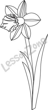 Lesson Zone AU - Daffodil B&W