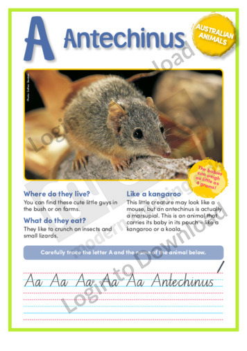 109593E12_NSW_AustralianAnimalsAnitechinus01