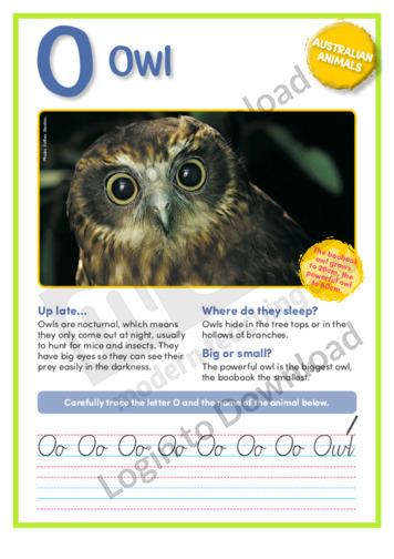 O: Owl