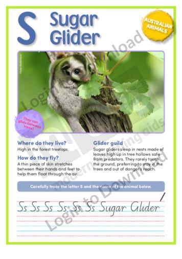 S: Sugar Glider