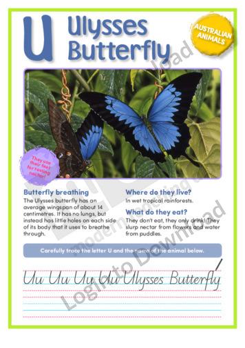 U: Ulysses Butterfly