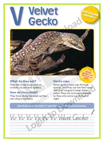 V: Velvet Gecko