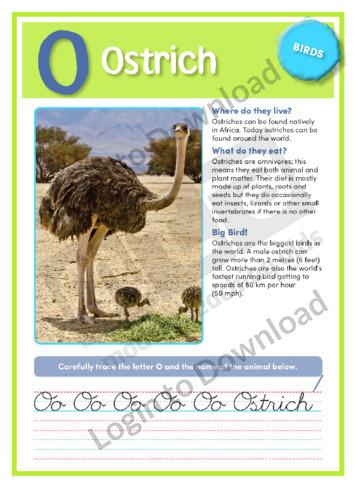 O: Ostrich