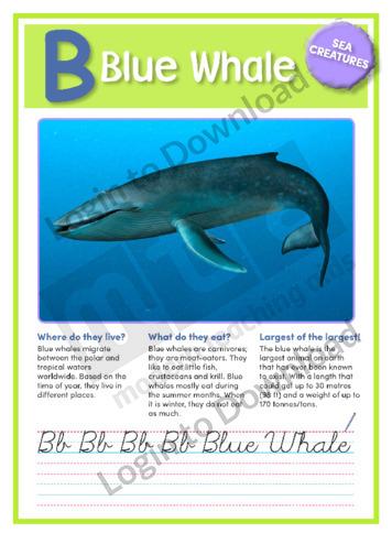 B: Blue Whale