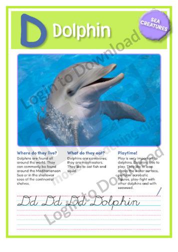 D: Dolphin
