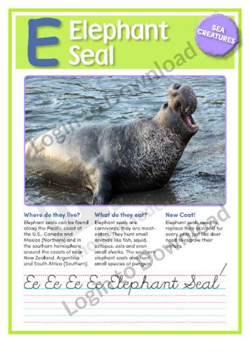 E: Elephant Seal