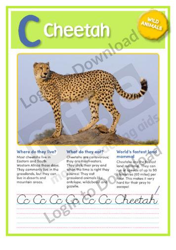 C: Cheetah