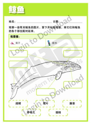 110526C02_生命科学鲸01