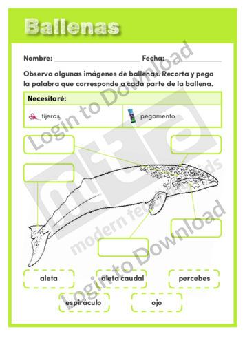 110526S03_CienciasdelavidaBallenas01