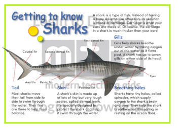 Getting to Know Sharks