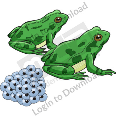 Frogs with eggs