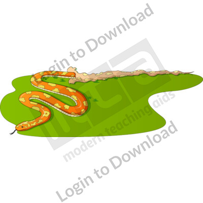 Baby snake shedding skin