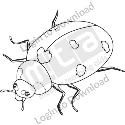 Adult ladybug B&W