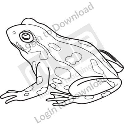 Adult frog B&W