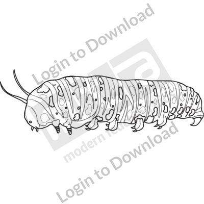 Butterfly larva B&W