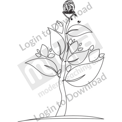 Fertilised flower with fruits that contain seeds B&W