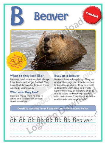 B: Beaver