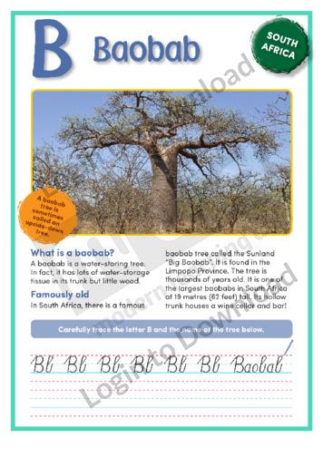 B: Baobab