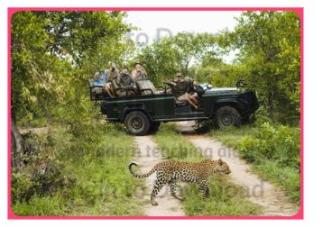 Photo Activity: Safari