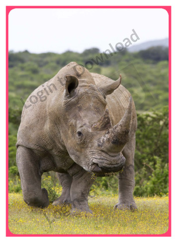 Photo Activity: Rhinoceros