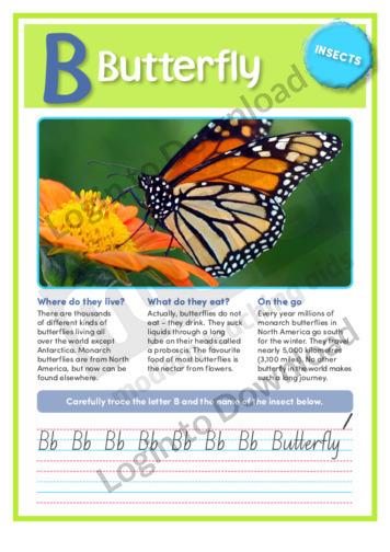 B: Butterfly