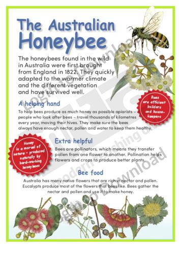 The Australian Honeybee