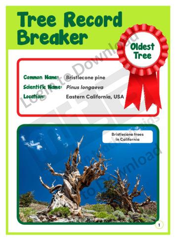 Tree Record Breaker 1