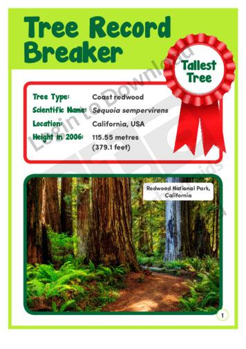 Tree Record Breaker 2