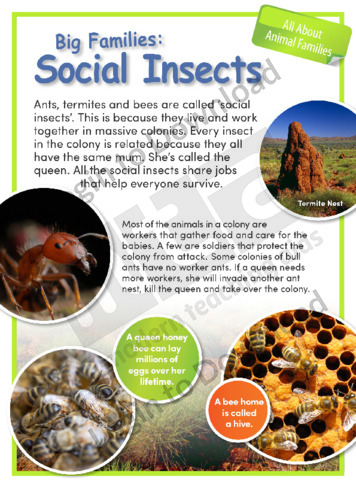 Big Families: Social Insects