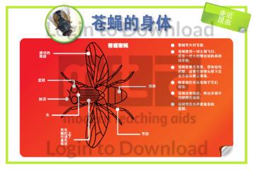102451C02_走近昆虫苍蝇的身体01